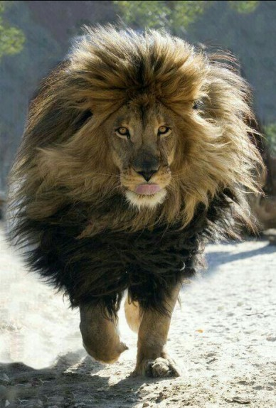 The-one-Majestic-King